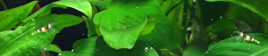 Miniwasserwelt Blog von Anja Weber zum Nano Cube