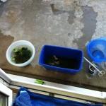 Neue Pflanzen im Mineralwasserbad