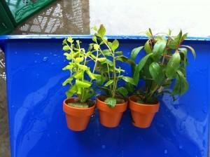 Wasserpflanzen von Ikea